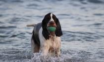 palinuro spiaggia per cani
